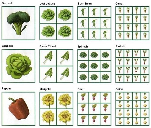 Vegetable Garden Ideas Layout Small Spaces Raised Beds